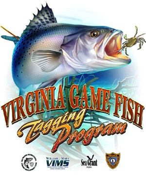 Virginia Fish  Game on The Virginia Game Fish Tagging Program  Vgftp  Is An Effort To Involve